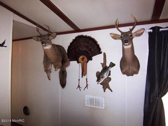 Trophys (photo 3)