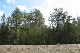 Wooded 2 acres (photo 4)