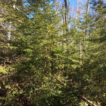 Nice trees (photo 3)