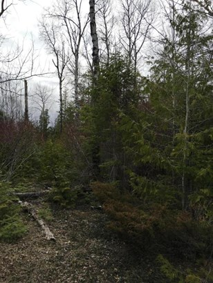Wooded waterfront lot (photo 2)