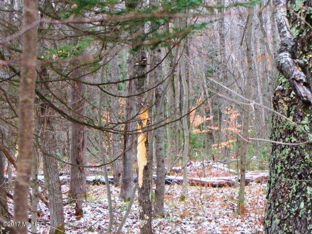 Woods (photo 4)