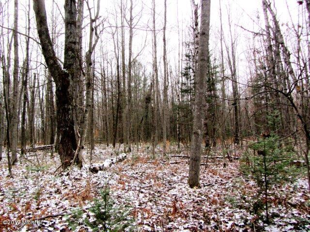 Mixed woods (photo 5)