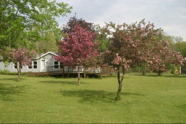 Flowering trees (photo 2)