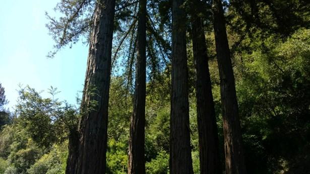 288 Tucker Road, Scotts Valley, CA - USA (photo 4)
