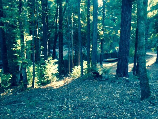 0 Woodland, Boulder Creek, CA - USA (photo 3)