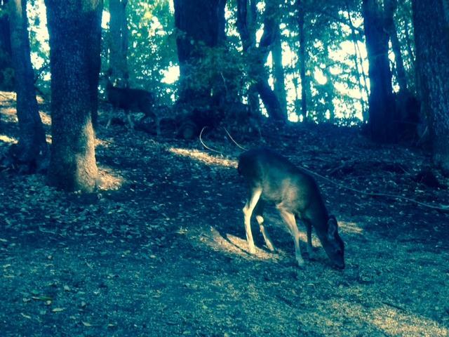 0 Woodland, Boulder Creek, CA - USA (photo 4)