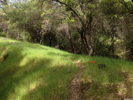 13655 Sun Forest, Penn Valley, CA - USA (photo 4)