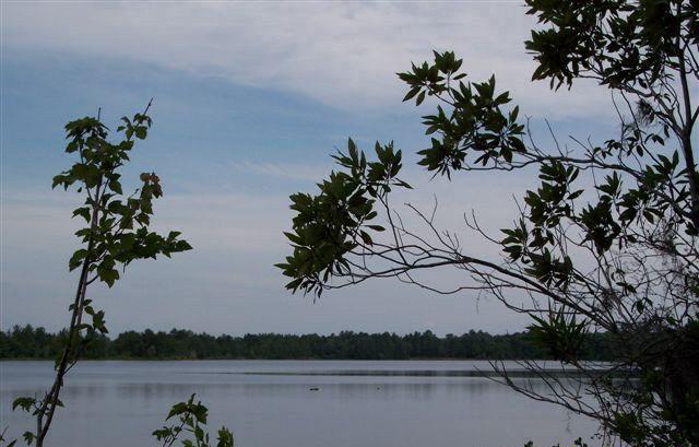 Land - Naylor, GA (photo 1)