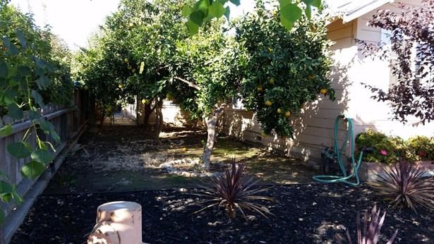 1541 Mitchell Ave, Escalon, CA - USA (photo 3)