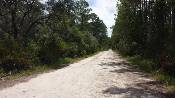 Vacant Land - Fort McCoy, FL (photo 3)