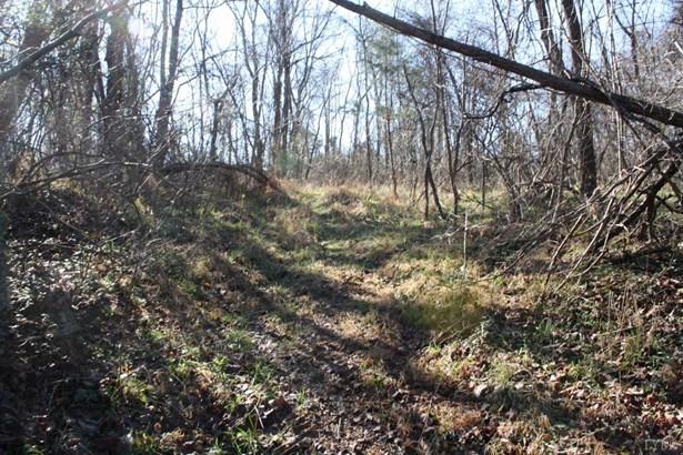 Land - Madison Heights, VA (photo 3)