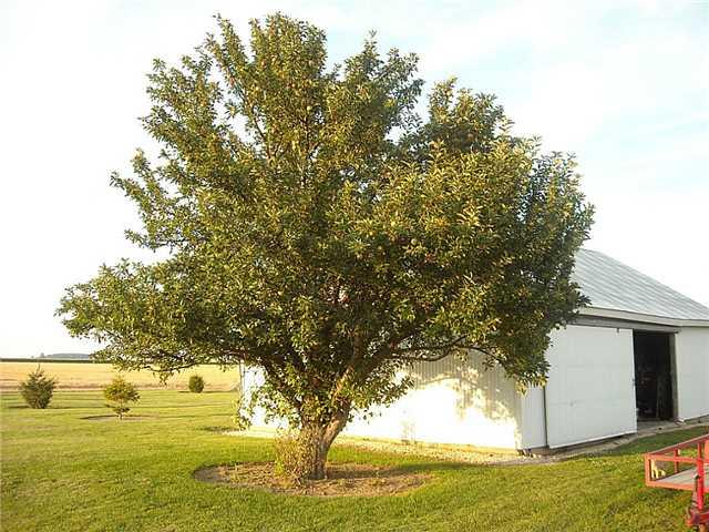 Custar Rd 3740, Deshler, OH - USA (photo 5)