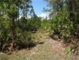 Timberland - PIERSON, FL (photo 1)