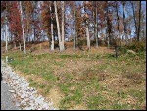 Recreational,Single Family,Waterfront Access - Bean Station, TN (photo 5)