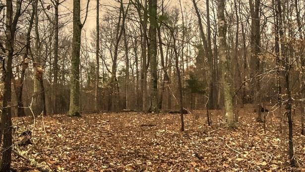 Single Family - Jacksboro, TN (photo 1)