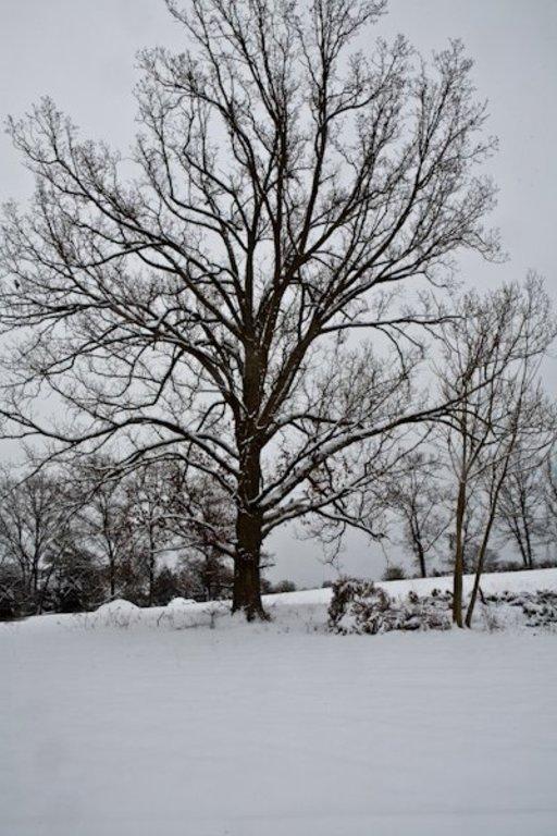 Single Family - Madisonville, TN (photo 4)