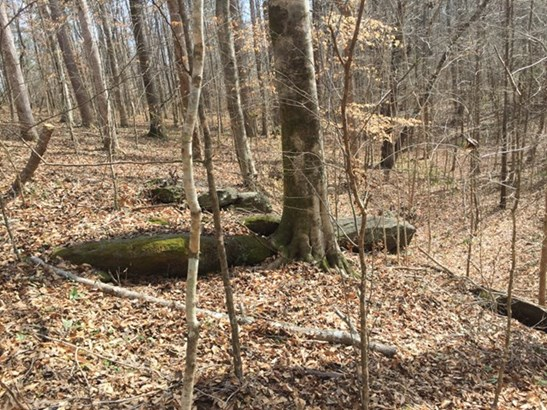 Land/Farm - Forsyth, GA (photo 3)