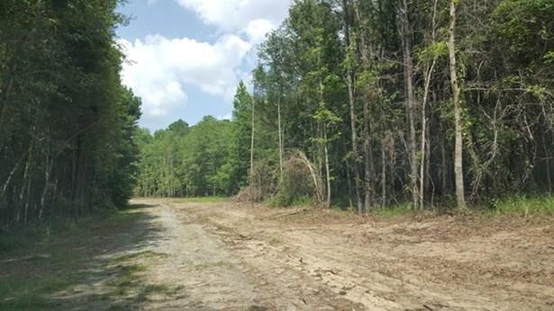 Land/Farm - Macon, GA (photo 4)