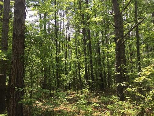 Land/Farm - Flovilla, GA (photo 2)