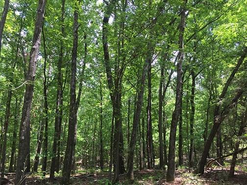 Land/Farm - Flovilla, GA (photo 3)