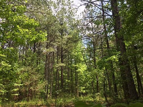 Land/Farm - Flovilla, GA (photo 4)