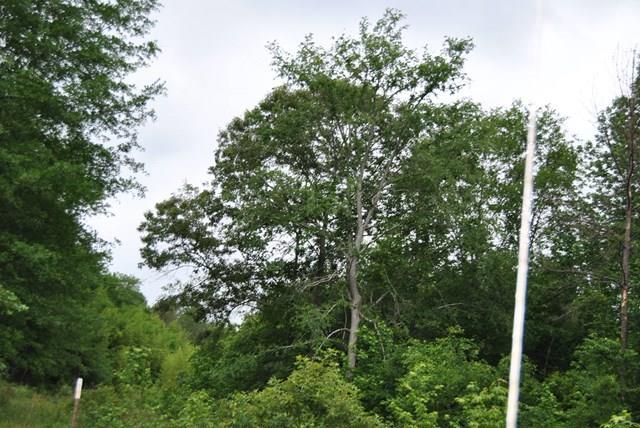 Land/Farm - Dry Branch, GA (photo 2)