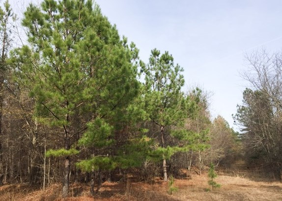 Land/Farm - Irwinton, GA (photo 4)