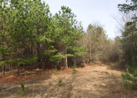 Land/Farm - Irwinton, GA (photo 3)