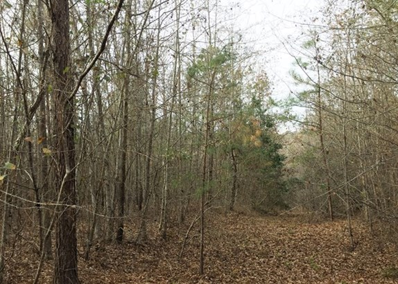 Land/Farm - Irwinton, GA (photo 5)
