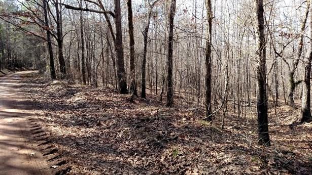 Land/Farm - Monticello, GA (photo 3)