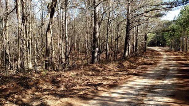 Land/Farm - Monticello, GA (photo 5)