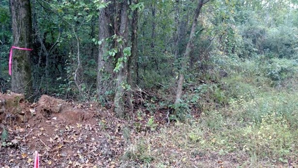 Residential Building Lot - Forsyth, GA (photo 4)