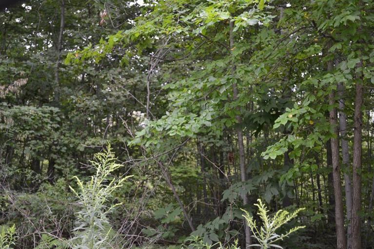 0 Riverdale, Whitmore Lake, MI - USA (photo 1)