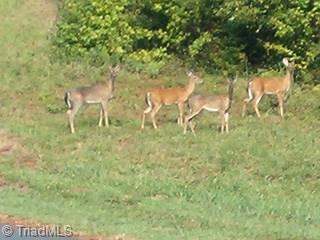 1336 Rocky Cove Lane, Denton, NC - USA (photo 4)