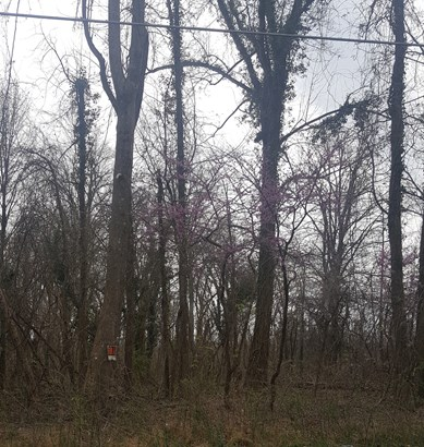 0 Fuller Mill Road, Thomasville, NC - USA (photo 2)