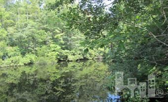 7 Big Creek Circle , Lake Waccamaw, NC - USA (photo 4)