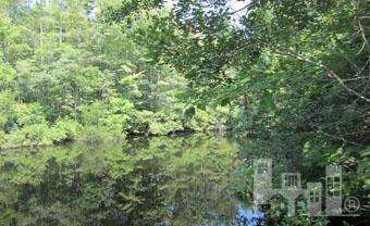 7 Big Creek Circle, Lake Waccamaw, NC - USA (photo 4)