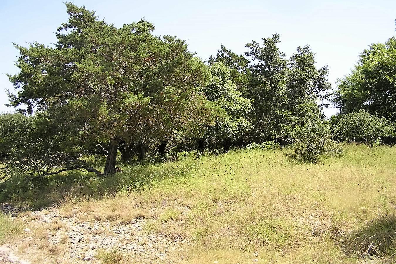 503   Breathless View , San Antonio, TX - USA (photo 1)