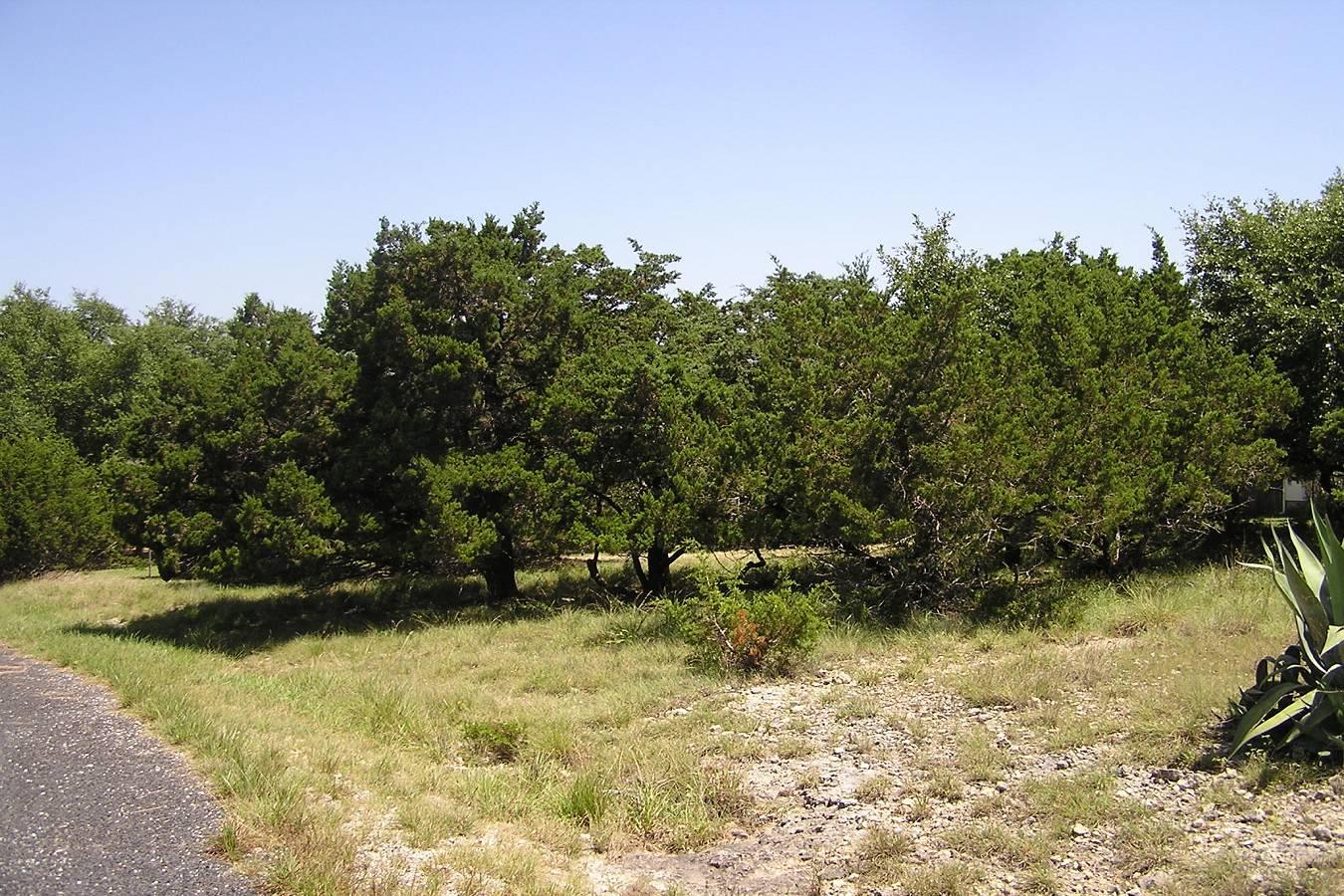 503   Breathless View , San Antonio, TX - USA (photo 5)