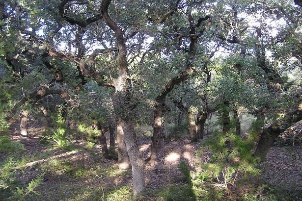 0   Breathless View , San Antonio, TX - USA (photo 2)