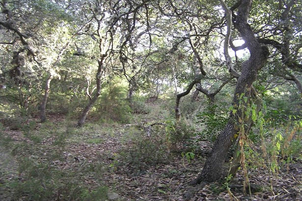 0   Breathless View , San Antonio, TX - USA (photo 3)