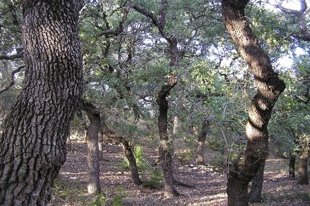 0   Breathless View , San Antonio, TX - USA (photo 4)
