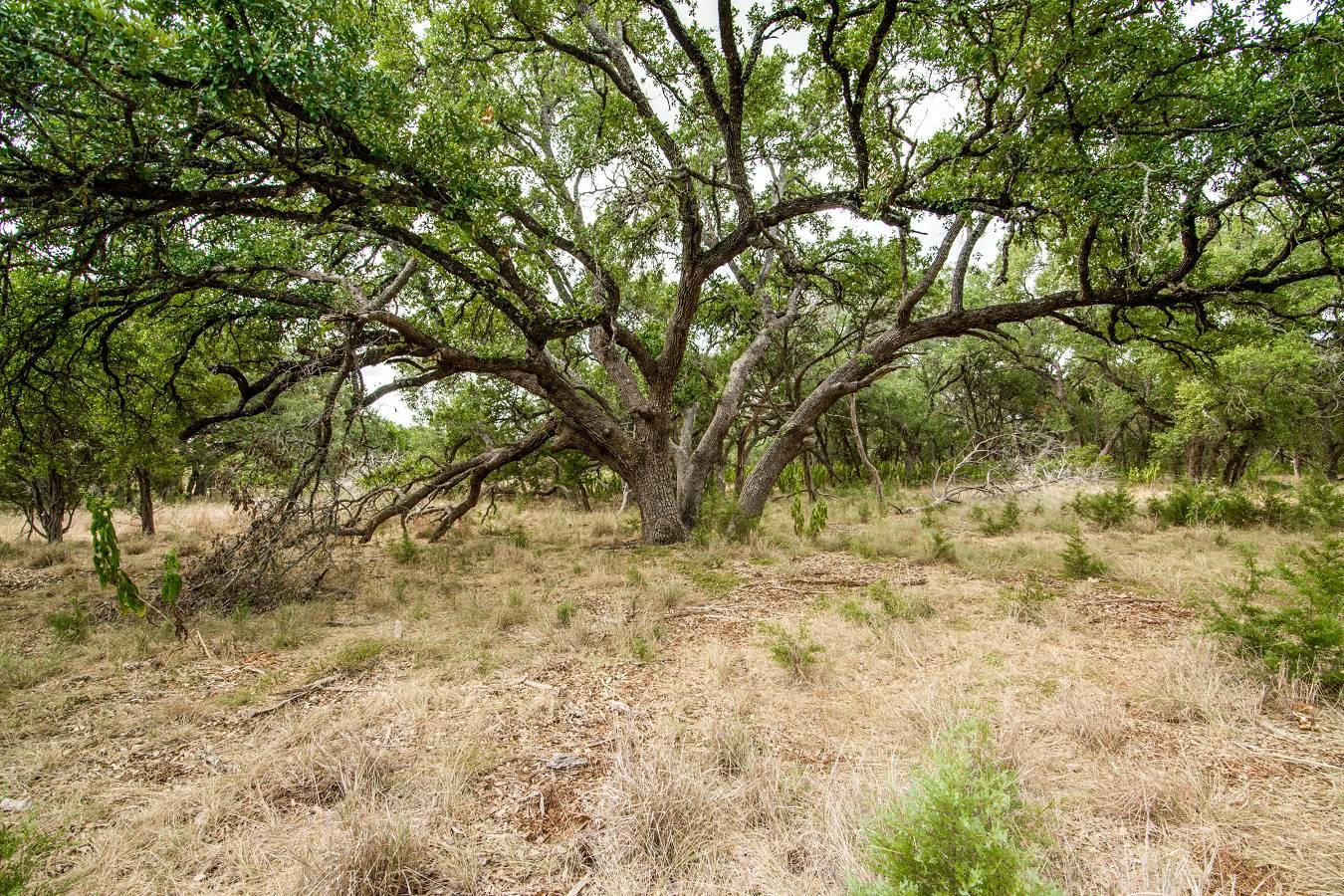 27723   Bogen Rd , New Braunfels, TX - USA (photo 5)