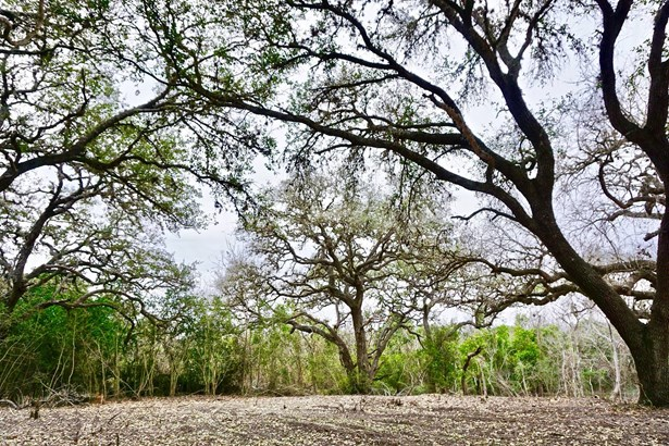 838 East Oak Unit Lot 3, Goliad, TX - USA (photo 1)