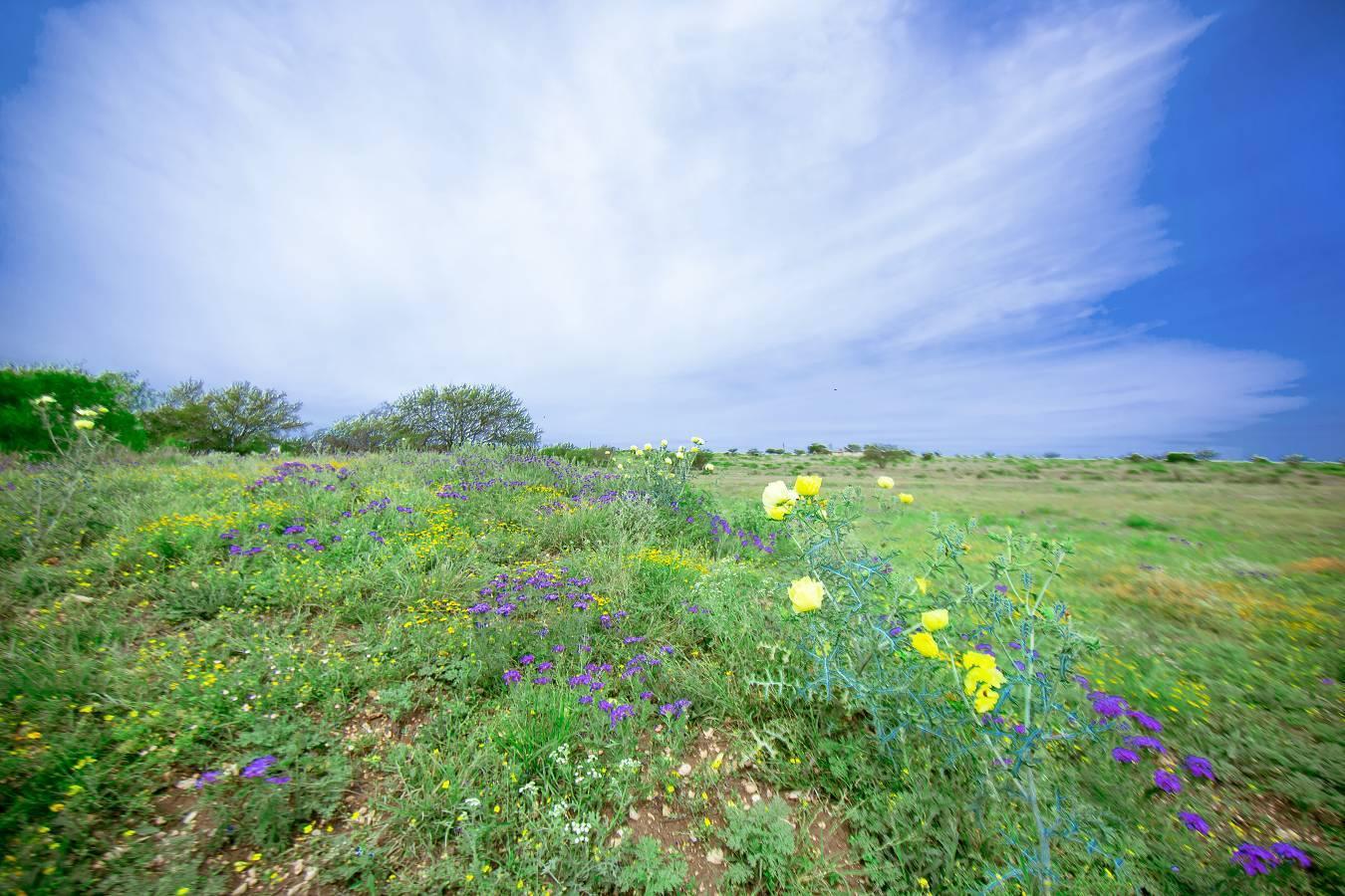 8022  Hwy 277 , Del Rio, TX - USA (photo 4)