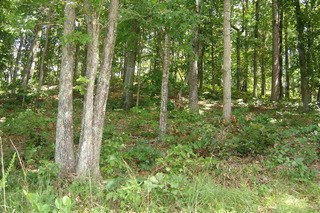 Lot 35 Wilderness Cove, West Union, SC - USA (photo 4)