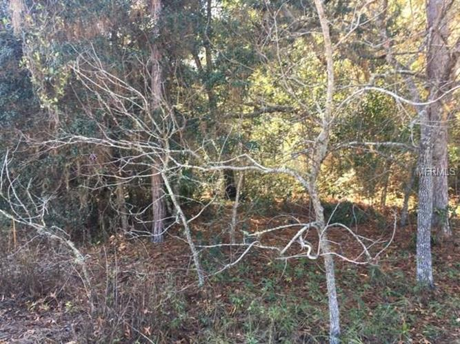 Tall Pines Dr, Dade City, FL - USA (photo 3)