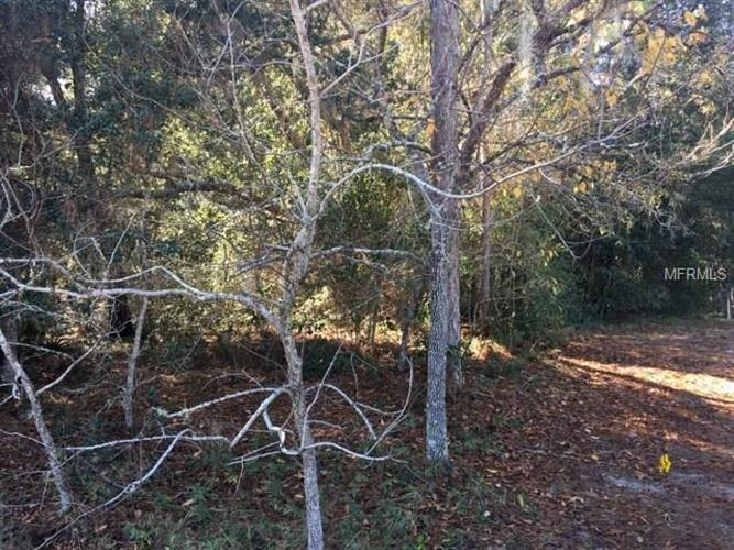 Tall Pines Dr, Dade City, FL - USA (photo 4)