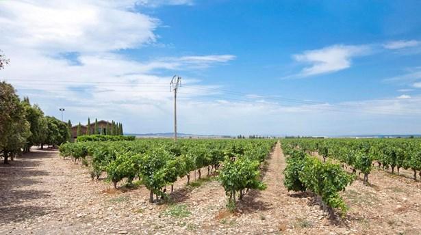 D.o.c. Rioja - ESP (photo 3)