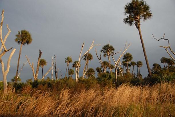21555 State Road 60, Vero Beach, FL - USA (photo 5)